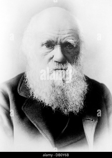 charles darwin british naturalist essay Charles darwin (12 february 180919 april 1882) was a british naturalist who achieved lasting fame as originator of the theory of evolution through natural selection.