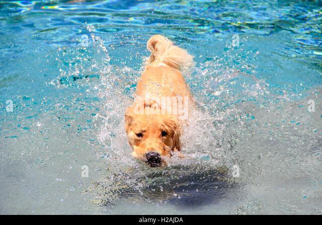 Dog Kennels Farnham