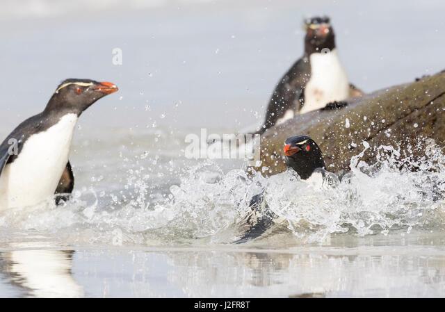 Rockhopper | Club Penguin Secrets