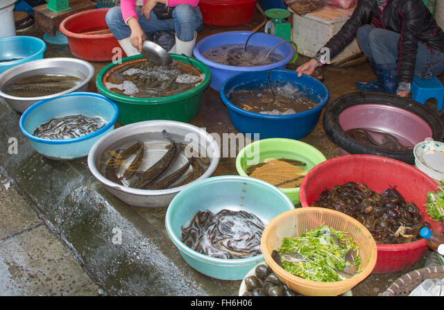Buy live fish stock photos buy live fish stock images for Fish meal for sale
