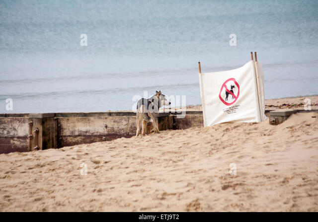 Dogs Life At Bournemouth Beach Dorset
