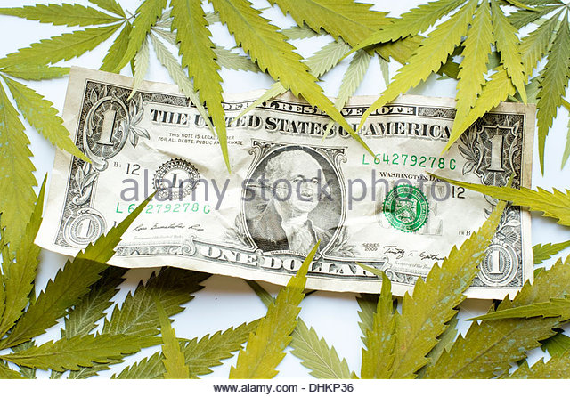 Dollar Weed Stock Photos & Dollar Weed Stock Images - Alamy