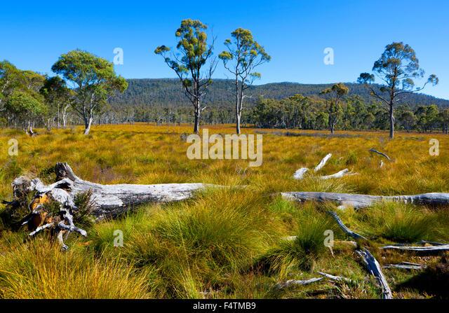 australia meadow stock photos australia meadow stock. Black Bedroom Furniture Sets. Home Design Ideas