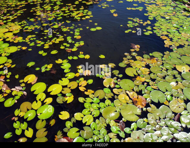 Paofai stock photos paofai stock images alamy for Ornamental fish garden ponds