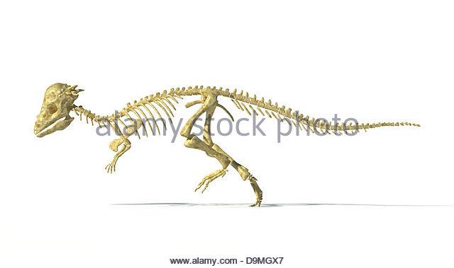 Pachycephalosaurus Stock Photos & Pachycephalosaurus Stock ...