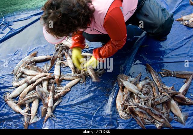 Cheongjin stock photos cheongjin stock images alamy for Free fishing piers near me