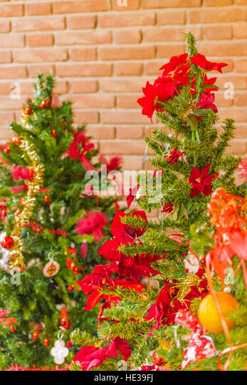 Poinsettia christmas tree stock photos poinsettia for Red and yellow christmas tree