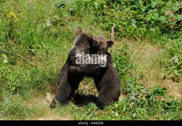 Bear Standing Side