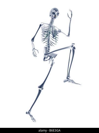 human skeleton cut out stock photos & human skeleton cut out stock, Skeleton