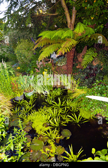 Typical english garden plants flowers stock photos for Ornamental pond plants