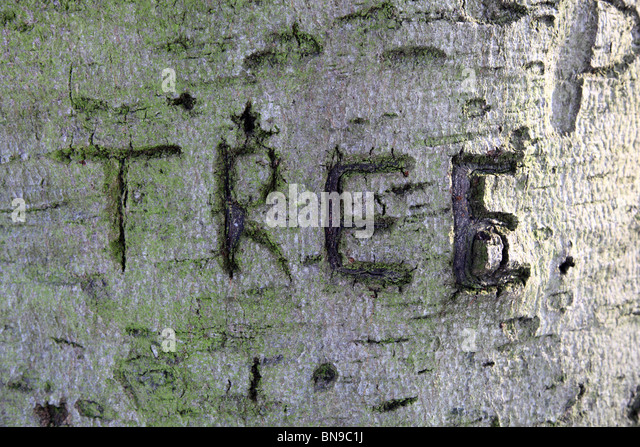 Letters carved on tree stock photos letters carved on for What is a tree trunk covered with 4 letters