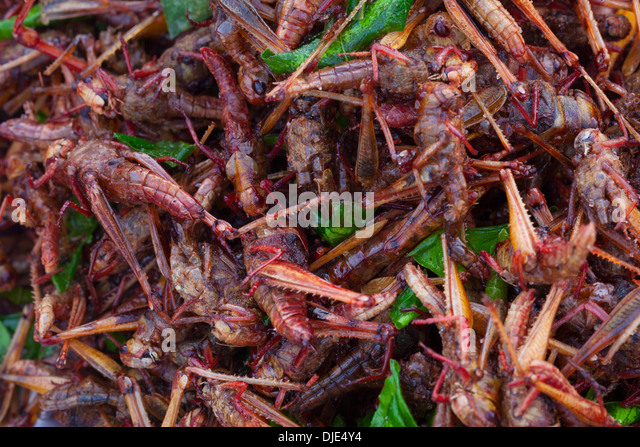 Crickets Food Stock Photos & Crickets Food Stock Images ...