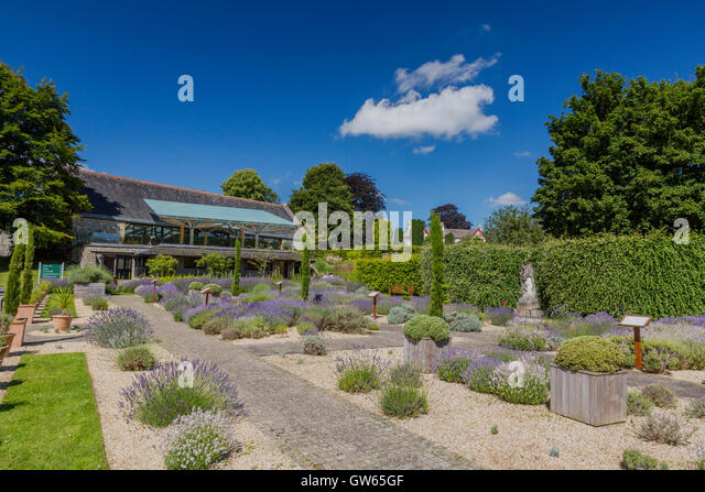 Picturesque Benedictine Stock Photos  Benedictine Stock Images  Alamy With Hot The Lavender Garden At Buckfast Abbey Completed  A Benedictine  Monastery In Buckfastleigh With Cute Garden Parasols Sale Also Garden Fencing Metal In Addition Home And Garden Uk And New Forest Garden Machinery As Well As Metal Garden Hose Reel Wall Mount Additionally Gardens Near London From Alamycom With   Hot Benedictine Stock Photos  Benedictine Stock Images  Alamy With Cute The Lavender Garden At Buckfast Abbey Completed  A Benedictine  Monastery In Buckfastleigh And Picturesque Garden Parasols Sale Also Garden Fencing Metal In Addition Home And Garden Uk From Alamycom