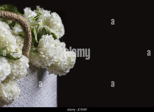White snowball flowers stock photos white snowball flowers stock side view closeup of wicker bag with knitted handles full of white snowball flowers on dark mightylinksfo