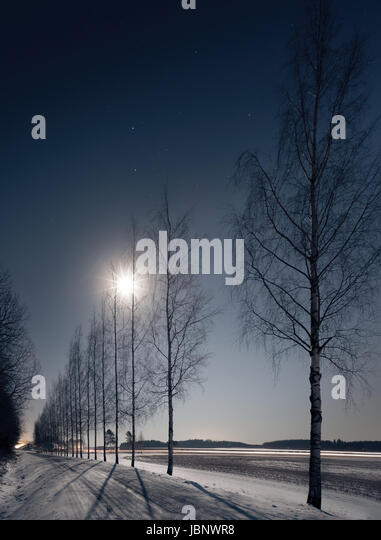 Landscape with moonlight and trees shadows at winter time - Stock Image