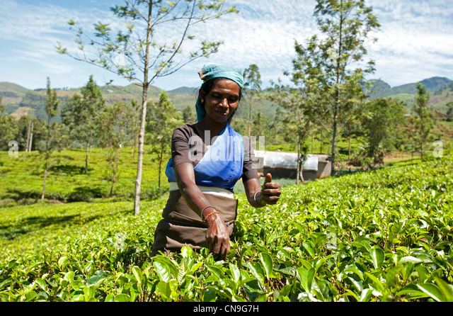 nuwara eliya single catholic girls The entire land area of the badulla district is 2,861 km² and on the north and by nuwara eliya and matale in wattala to a roman catholic.