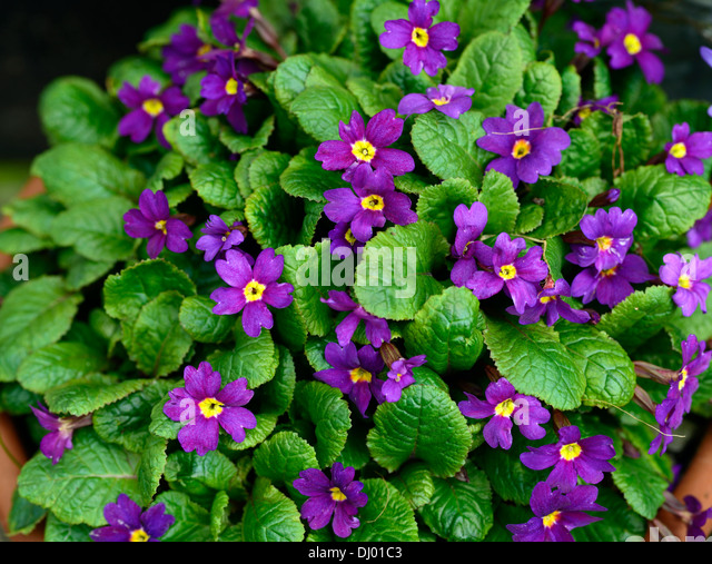 Ванда цветы фото