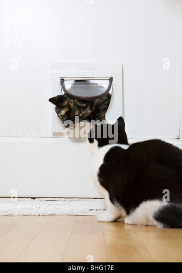 Other Cats Coming Through Cat Flap
