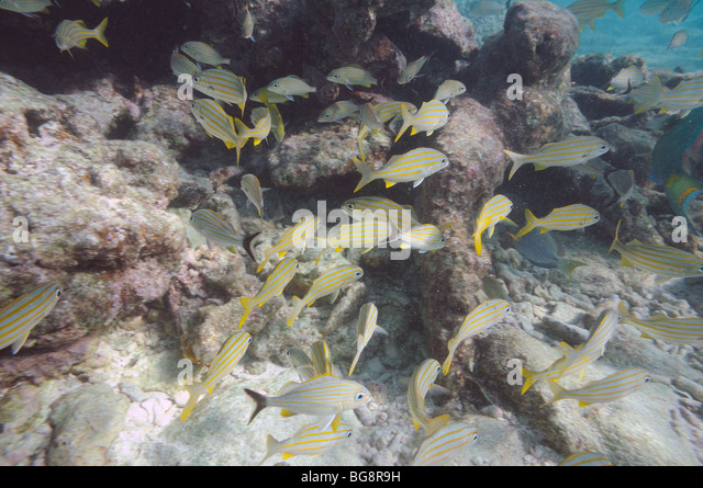 Anture stock photos anture stock images alamy for Seven fish key west fl
