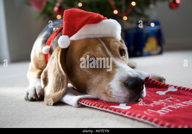 A Dog Is For Life Not Just For Christmas Stock Photos & A Dog Is ...