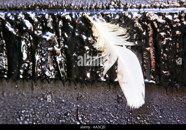 Tar And Feather Stock Photos Amp Tar And Feather Stock