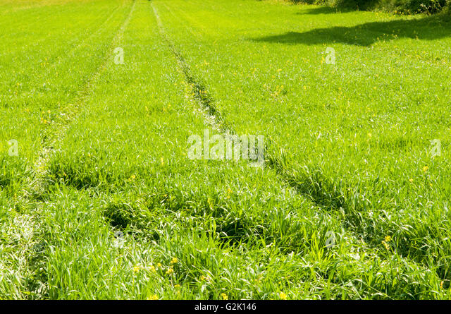 themes in green grass running water Green grass, running water is a 1993 novel by thomas king, a writer of cherokee and greek/german-american descent, and united states and canadian dual citizenship he.