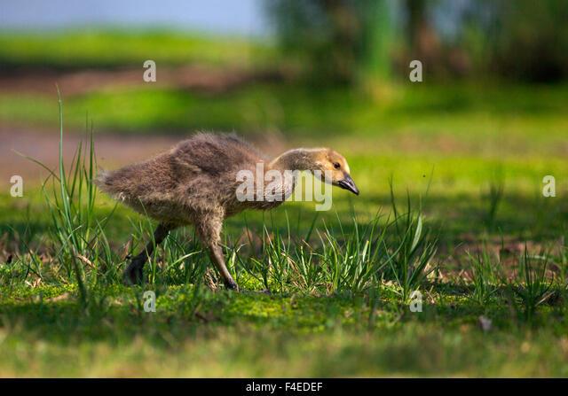 Canada Goose langford parka replica cheap - Usa California San Diego Lakeside Stock Photos & Usa California ...