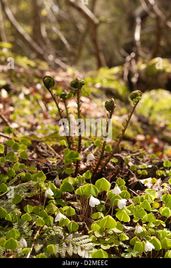 Macrow stock photos macrow stock images alamy for Green floor plant