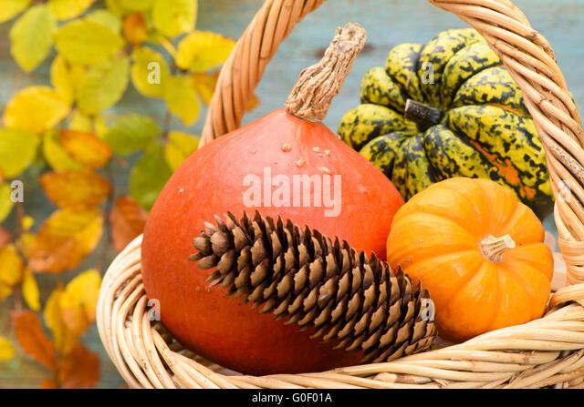 Dekoration Fruchte Herbst Stock Photos & Dekoration