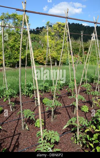 Garden Poles Stock Photos Garden Poles Stock Images Alamy