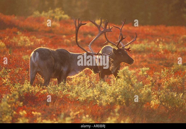 denali national park sex chat Rondane national park free download - rondane national park travel guide, wonders of denali national park, travel sequoia national park, and many more programs.