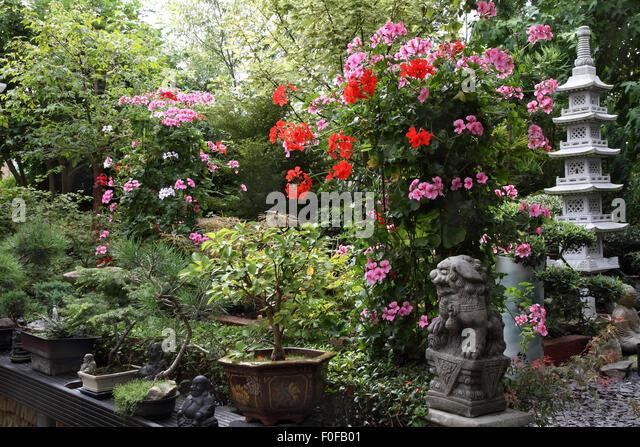 Oriental Garden In Bedfordshire, England   Stock Image