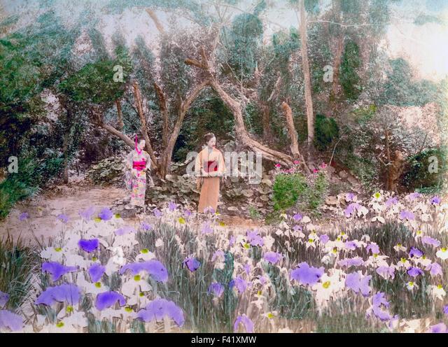 Horikiri Iris Garden, Tokyo, Japan   Stock Image