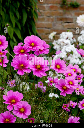 Late Summer Flowering Stock Photos Late Summer Flowering