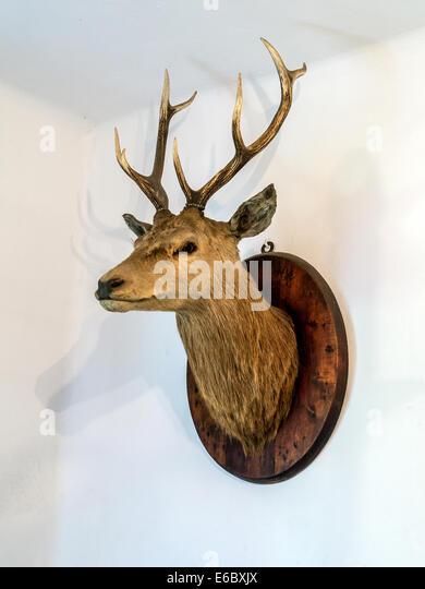 Deer Antler Wall Stock Photos Deer Antler Wall Stock