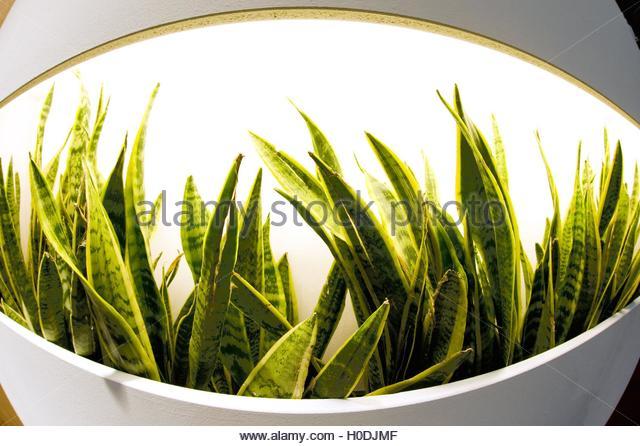 Zimmerpflanzen stock photos zimmerpflanzen stock images for Zimmerpflanzen set