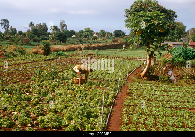 Search Results For Market Gardening Mauritius Travel Stock Photos And Images