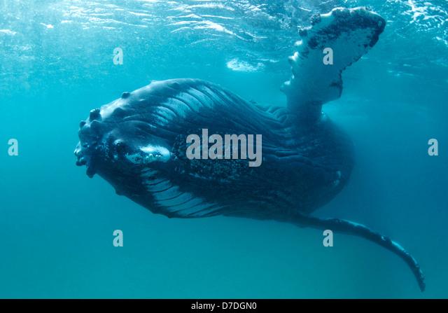 Arabian Sea Stock Photos Amp Arabian Sea Stock Images Alamy