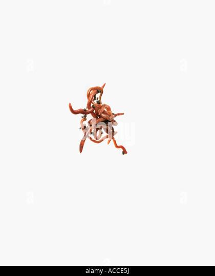 Worm Earthworm