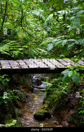 L Clamitans Biological Reserve Sto...