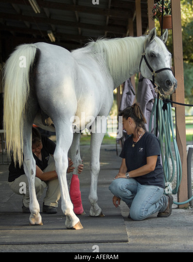 Veterinary Horse Stock Photos Amp Veterinary Horse Stock