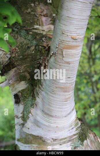 Birch Bark Canoe Stock Photos Amp Birch Bark Canoe Stock