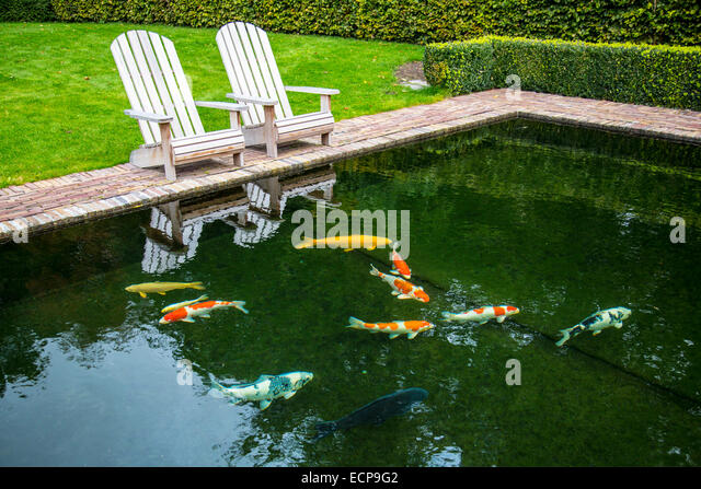 Koi carp cyprinus carpio stock photos koi carp cyprinus for Carp fish pond