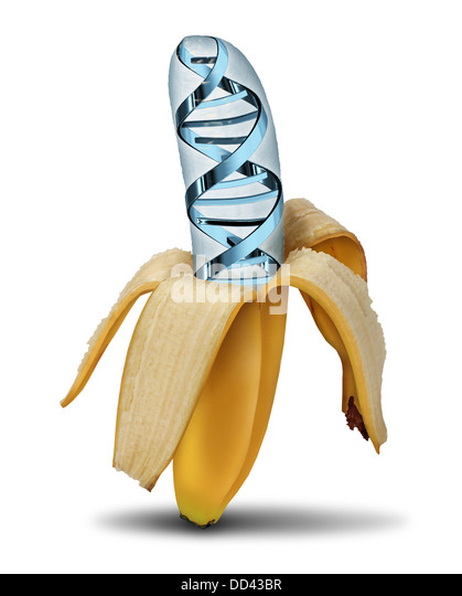 biotechnology genetically modified foods Genetically modified foods or gm foods, also known as genetically engineered foods, bioengineered foods, genetically modified organisms, or gmos, are foods produced from organisms that have had changes introduced into their dna using the methods of genetic engineering.