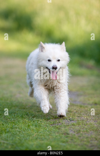 Chien Loup Stock Photos & Chien Loup Stock Images - Alamy