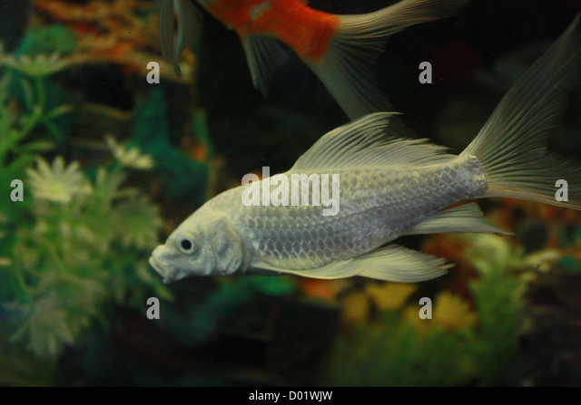 Freshwater aquarium fish for sale philippines 2017 fish for Aquarium fish for sale online