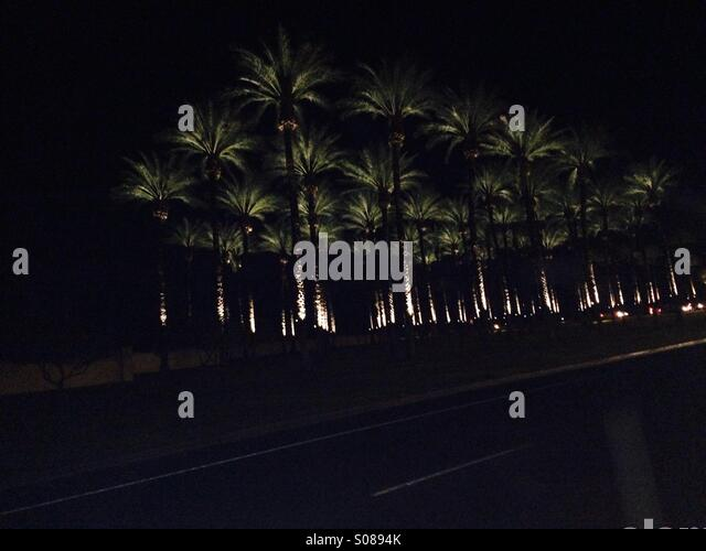 Palm Trees With Christmas Lights Pictures Part - 47: Palm Trees With Christmas Lights At Night. - Stock Image