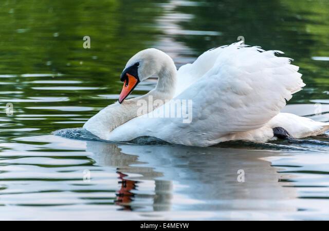 white swan milf women White swan bio stretch 19021 women's angled v-neck top bio stretch $2099 19021 $2099 loading compare white swan fundamentals 14820 covered elastic pull.