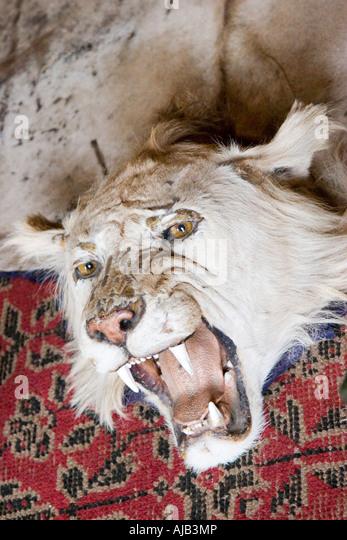 Lion Skin Rug   Stock Image