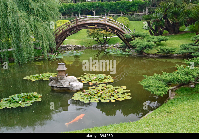 Water lilies and japanese bridge stock photos water for Japanese garden fish